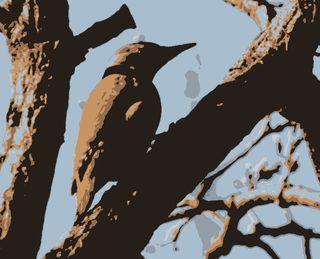 Grey-headed-Woodpecker_MF